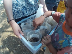 Planting and growing seeds with biochar
