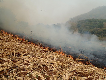 burning rice firelds