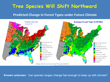 climate change impacts on forests and ecosystems