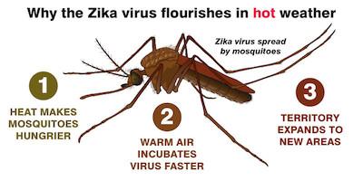 climate change impacts zika virus spread