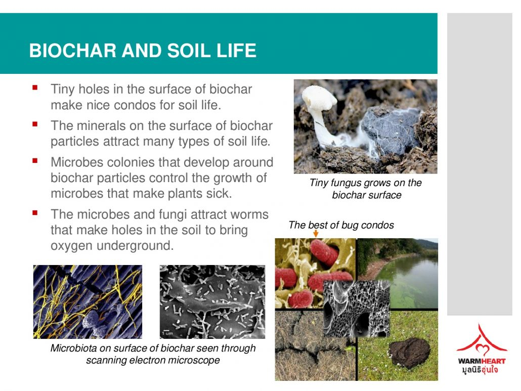 making-biochar-fertilizer-017