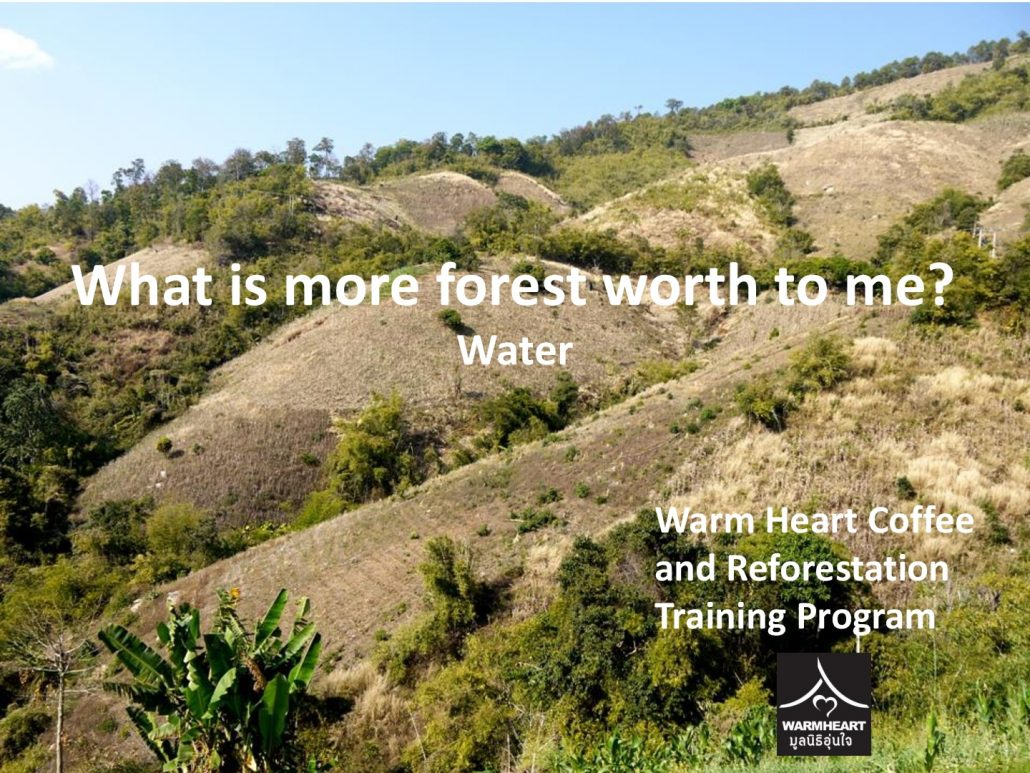 whats-a-forest-worth-to-me-water-001
