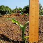 Commercial fertilizer