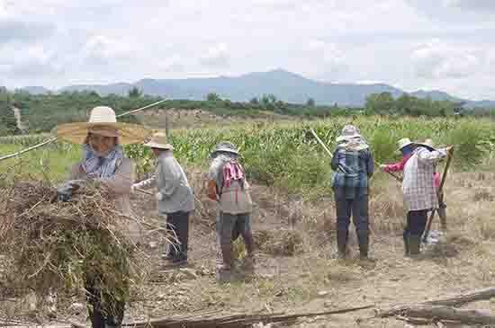 Demonstration farm