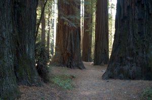 california-975937_640