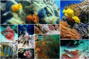 fish-collage-1502406_640