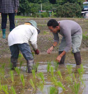 P1130402 Darryl Planting Rice