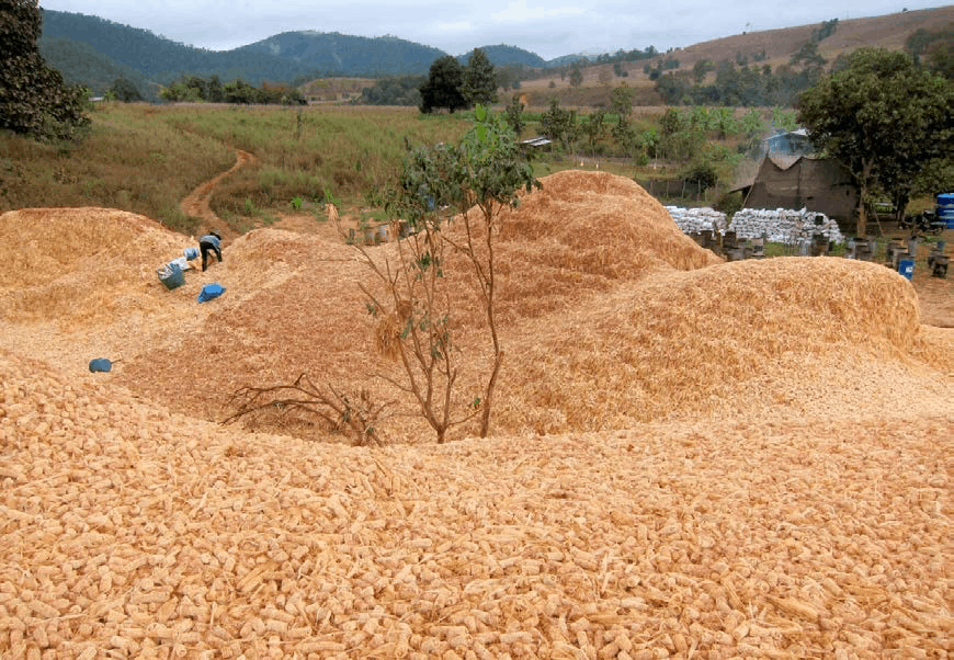 Biochar Mae Chaem