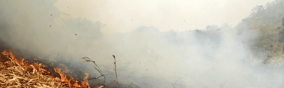 Smoke from agricultural burning