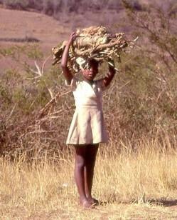 biochar africa