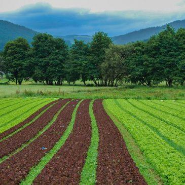 Biochar for Sustainable Soils