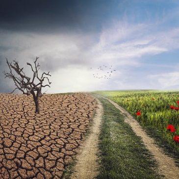 Archive Environmental News February 2020
