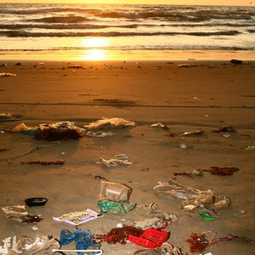 Changing our Plastic Ways